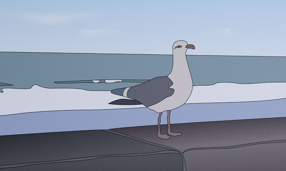 Illustration Goëland © Aurélien Biard