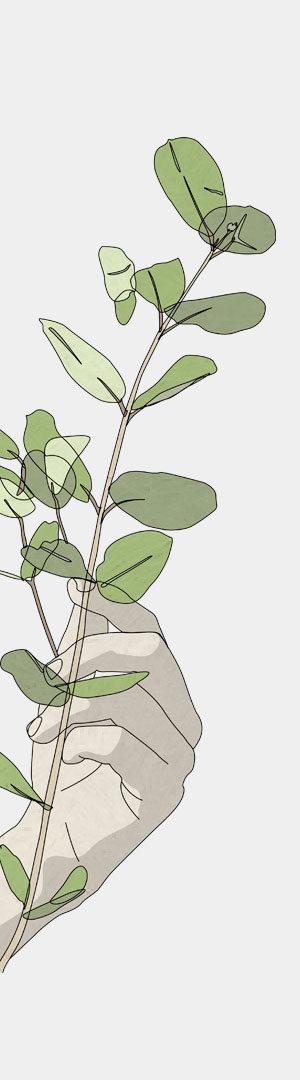 Eucalyptus © Aurélien Biard